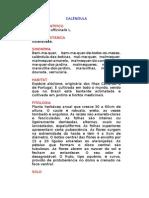 Calêndula - Calendula officinalis L. - Ervas Medicinais – Ficha Completa Ilustrada