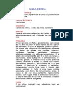 Canela-cheirosa - Cinnamomum zeylanicum Blume e Cynamomum cassia Blume. - Ervas Medicinais – Ficha Completa Ilustrada