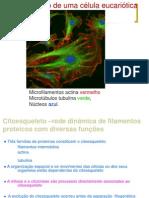 2012-2013 Turma 3 Organizacao Espacial Do Citosol Citoesqueleto e Mitose
