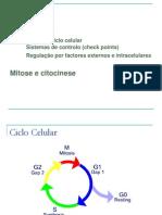 2012-2013 Turma 3 Regulacao Ciclo Celular