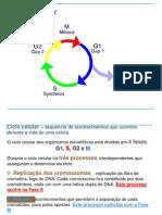 2012-2013 Turma3 Cicl Celular Mitose