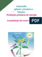 2012-2013_Turma3cloroplastos_fotossintese