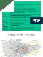 2012 2013Turma3 Mitocondria e Funcao