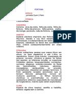 Fortuna - Kalanchoe pinnata [Lam.] Pers. - Ervas Medicinais – Ficha Completa Ilustrada