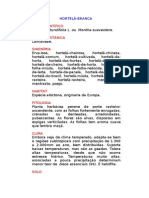 Hortelã-branca - Mentha rotundifolia L. ou  Mentha suaveolens. - Ervas Medicinais – Ficha Completa Ilustrada