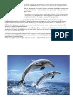 Delfini i