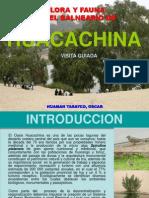Flora y Fauna en Huacachina