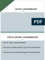 CÉLULAS DE LANGERHANS