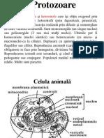 01 protozoare