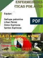 zoonosis por aves.pptx