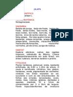 Jalapa - Mirabilis jalapa L. - Ervas Medicinais – Ficha Completa Ilustrada