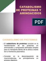 Catabolismo de Proteinas y Aminoacidos