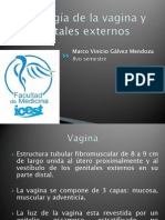 histologadelavaginaygenitalesexternos-120109224829-phpapp02