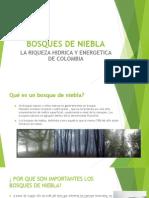 Bosques de Niebla