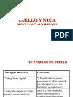 Cuello, Aponeurosis y Musculos