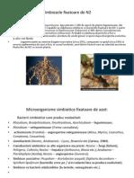 Rolul Elementelor Minerale Ppppptx (1)