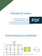 Prelegerea 11. Mecanismele de formare a potenţialului de acţiune