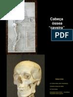 Anatomia Teórica - 2º módulo
