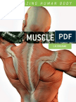 37390199 Muscles the Amazing Human Body
