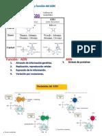 5. Estructura y función del ADN
