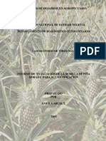 Informe de Evaluacion de parcelas semilla      Piña dorada