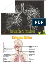 Anatomi Nafas