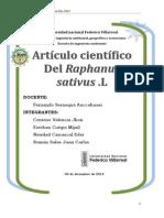 Hidroponía Rabanito Mijail1