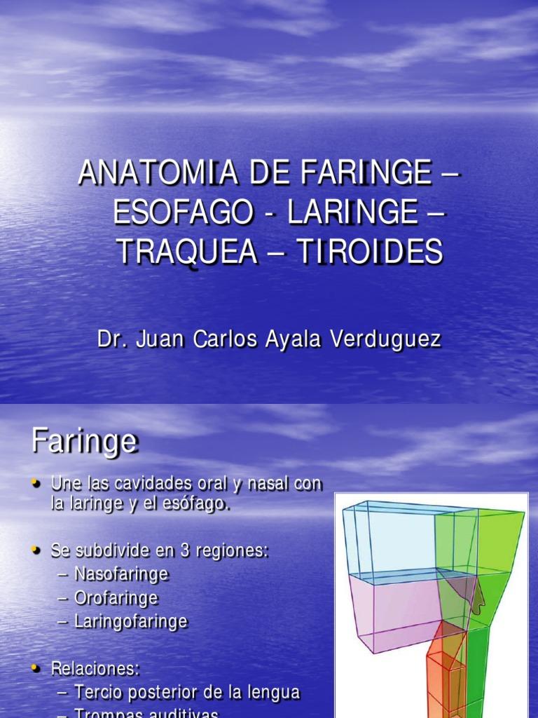 Faringe Laringe Traquea Tiroides [Autoguardado]