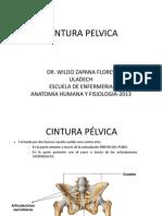 ULADECH--CINT PELVICA