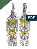 Anatomia Do Sistema Linfatico - Figura