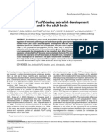 Expression of FOXP2 During Zebrafish Development and in the Adult Brain