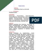 Tinge-ovos - Phytolacca thyrsiflora Fenzl. Ex Schmidt. - Ervas Medicinais – Ficha Completa Ilustrada
