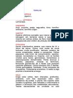 Tomilho - Thymus vulgaris L. - Ervas Medicinais – Ficha Completa Ilustrada