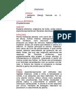 Zedoária - Curcuma zedoaria [Berg] Roscoe ou C. aeruginosa RoxB. - Ervas Medicinais – Ficha Completa Ilustrada