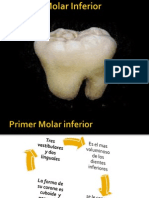 Presentacion Anatomia Dental