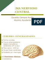 SNC - Cerebelo y Cerebro