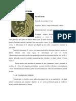 Bacilul Cereus