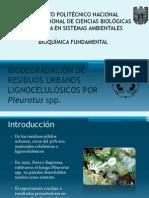 BIODEGRADACIÓN DE RESIDUOS URBANOS LIGNOCELULÓSICOS POR Pleurotus (1)