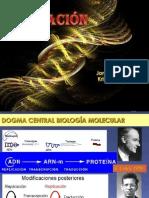 genetica-replicacin-fi-nal-97-1205030194912816-5