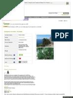 www_pfaf_org_user_Plant_aspx_LatinName_Juniperus_excelsa.pdf