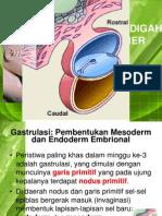 Blok 5 - IT 19 & 20 - Embrio Umum 4 - IsS