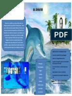 Infografia de El Delfin
