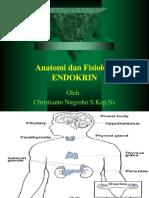 Endokrin Excellent