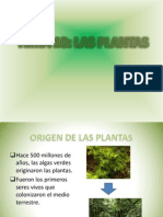 tema10lasplantas-edoxford1eso-120907060936-phpapp02