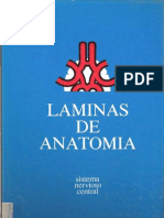 Láminas_de_Anatomía_del_sistema_nervioso_central
