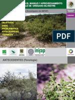 3-Tecnologia Para El Manejo y Aprovechamiento Sustentable de Oregano Silvestre - Copia[1]