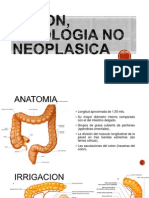 Colon, Patologia No Neoplasica
