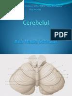 Curs 4 -Cerebelul