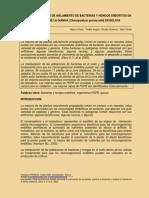 A_CLAROS Mayra Primeros Reportes de Aislamiento de Bacterias(Agro)