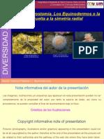 presentacion_11